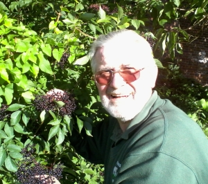 Tom Keys gathers Elderberries for another batch of home-made wine.